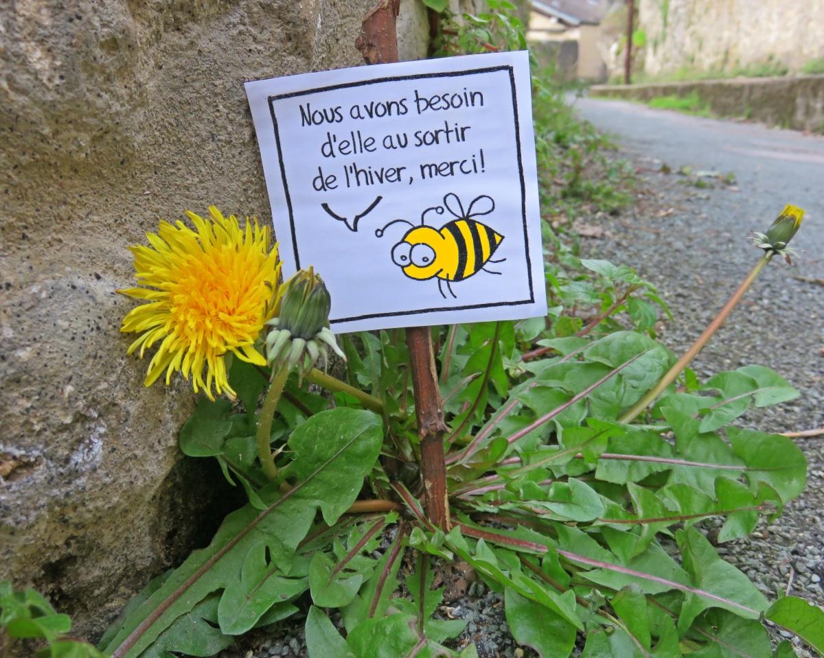 Sauvages du poitou les 10 fleurs sauvages qu 39 on ne d sherbera plus au jardin - Le jardin des fleurs poitiers ...
