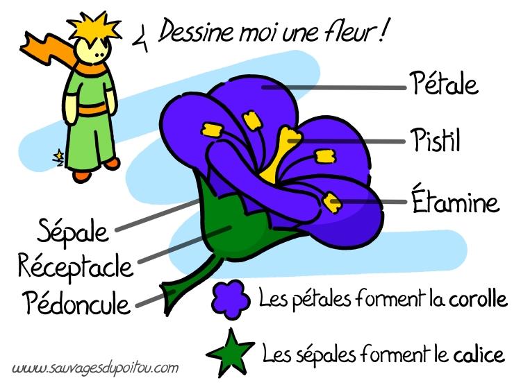 http://blogs.mightyprods.com/users/13/upload/image/Botanique/fleur-theorique.jpg
