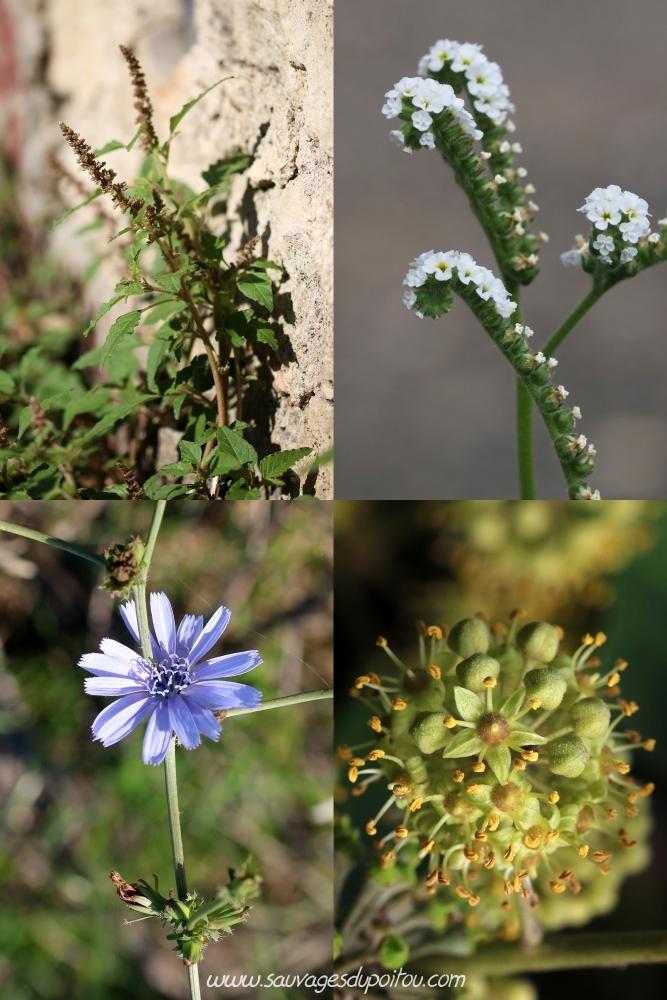 Conversion Calendrier Republicain Gregorien.Sauvages Du Poitou Quelle Fleur Jour Etes Vous Nes